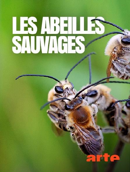 Arte - Les abeilles sauvages