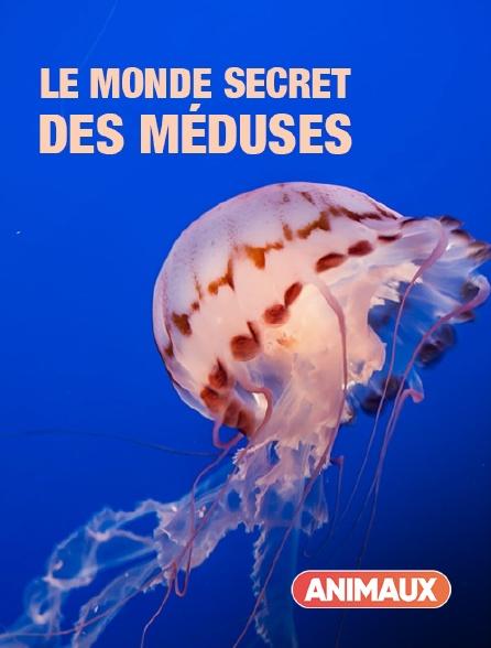 Animaux - Le monde secret des méduses