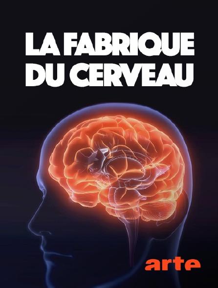 Arte - La fabrique du cerveau