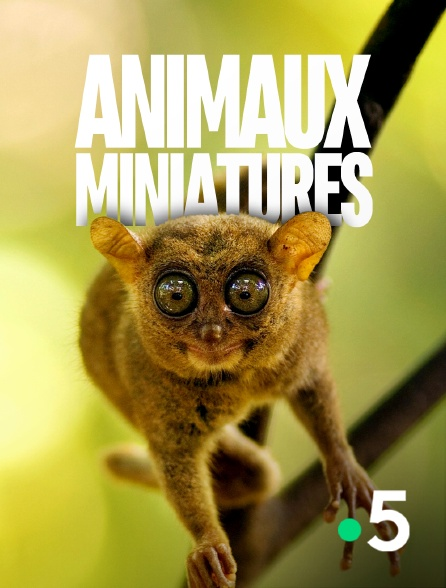 France 5 - Animaux miniatures