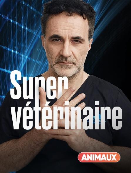 Animaux - Super vétérinaire