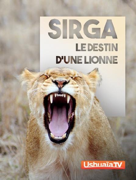 Ushuaïa TV - Sirga, le destin d'une lionne