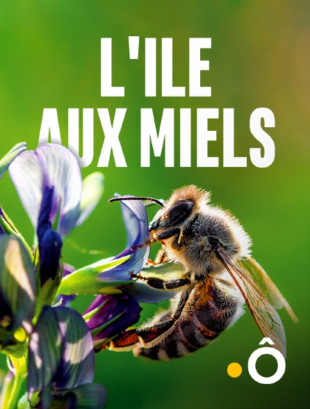 France Ô - L'île aux miels