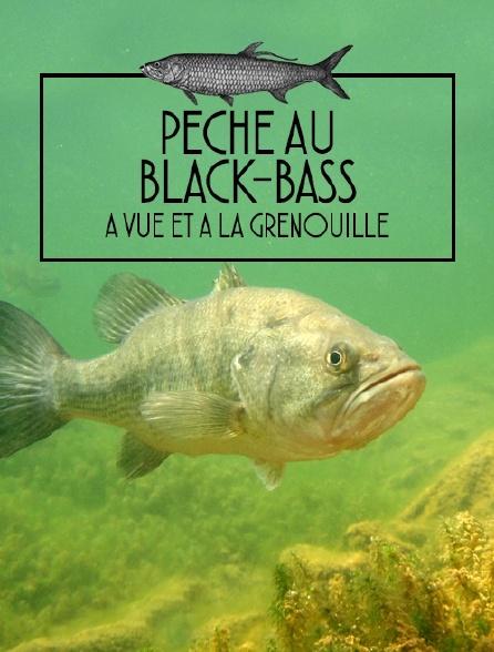 Pêche au black-bass à vue