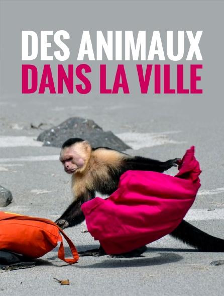 Des animaux dans la ville