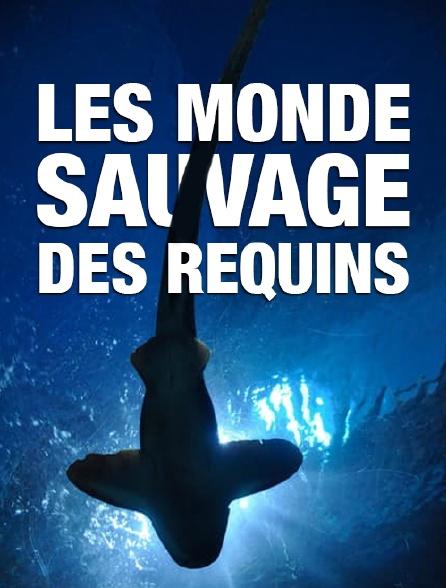 Le monde sauvage des requins
