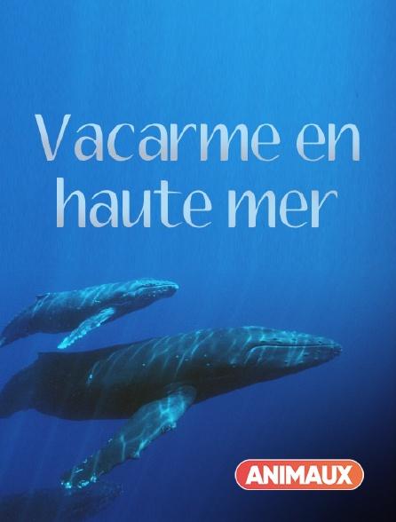 Animaux - Vacarme en haute mer