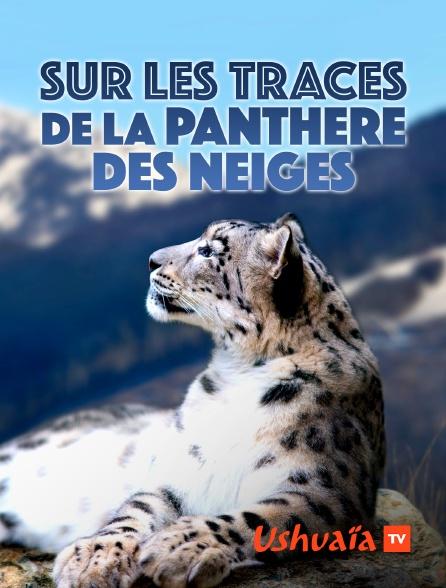 Ushuaïa TV - Sur les traces de la panthère des neiges