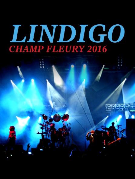 Lindigo (Champ Fleury 2016)