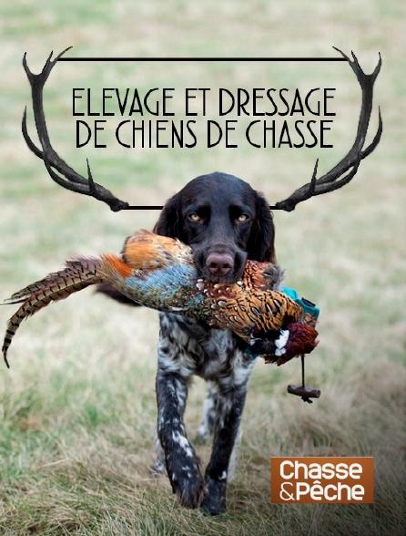 Chasse et pêche - Elevage et dressage de chiens de chasse