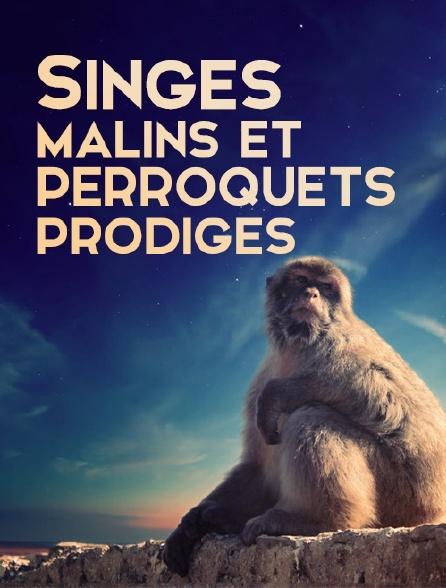 singes malins et perroquets prodiges