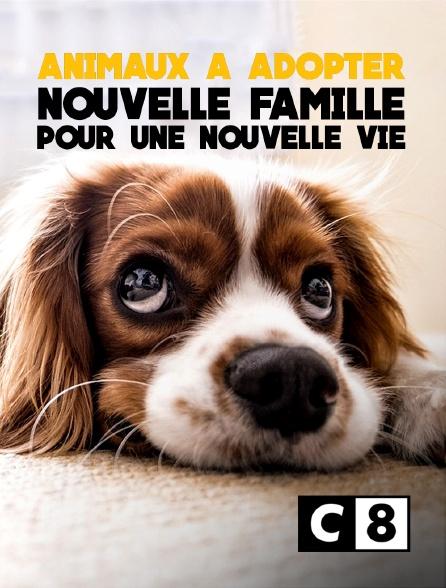C8 - Animaux à adopter : nouvelle famille pour une nouvelle vie