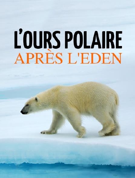 L'ours polaire après l'eden