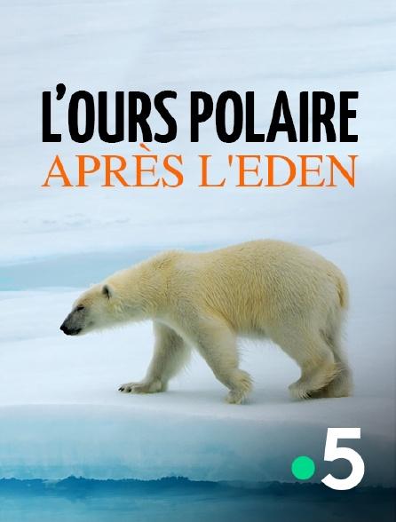 France 5 - L'ours polaire après l'eden