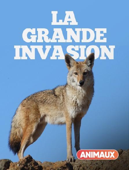 Animaux - La grande invasion