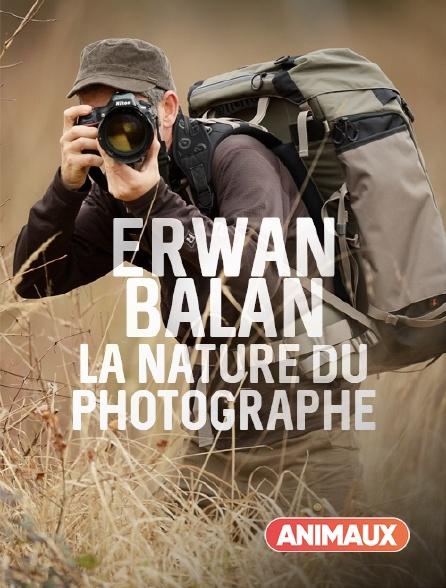 Animaux - Erwan Balança, la nature du photographe