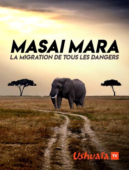Ushuaïa TV - Masai Mara : la migration de tous les dangers