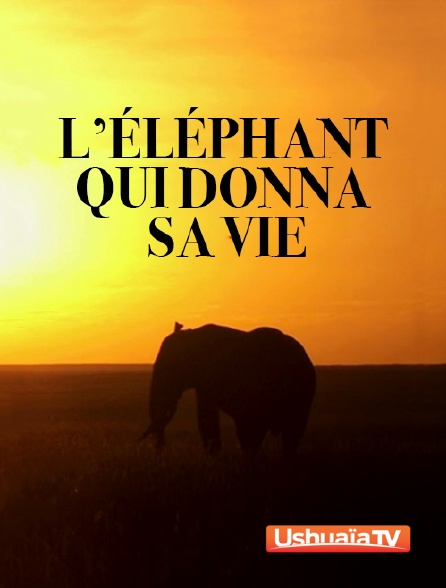 Ushuaïa TV - L'éléphant qui donna sa vie