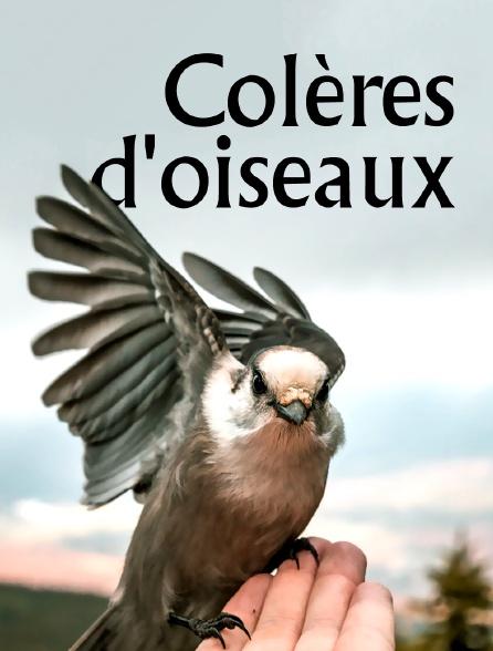 Colères d'oiseaux