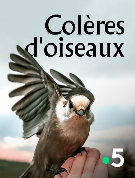 France 5 - Colères d'oiseaux
