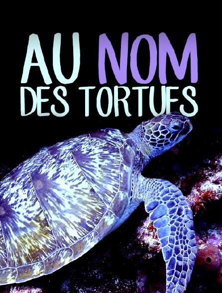 Au nom des tortues