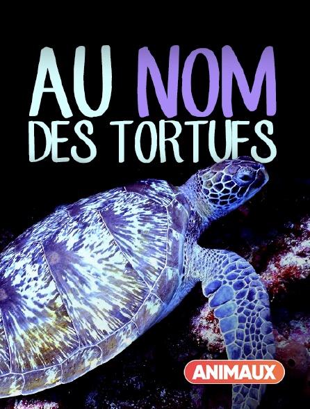 Animaux - Au nom des tortues