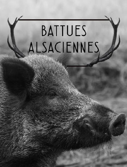 Battues alsaciennes