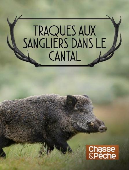 Chasse et pêche - Traques aux sangliers dans le Cantal