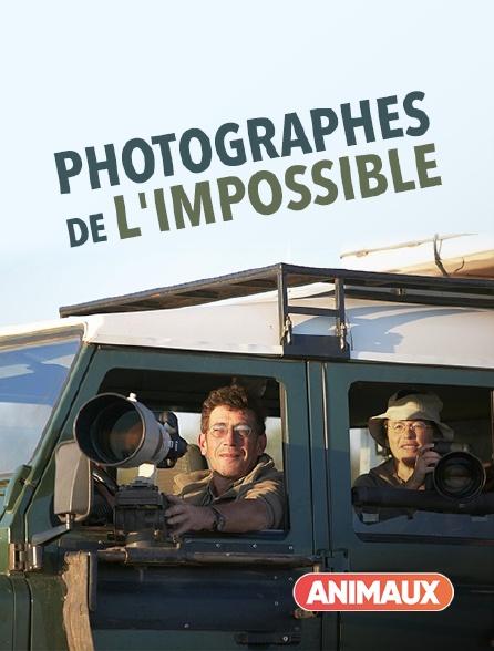 Animaux - Photographes de l'impossible
