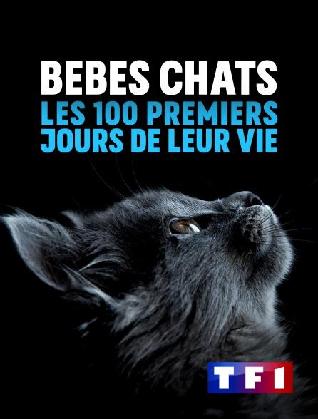 TF1 - Bébés chats : les 100 premiers jours de leur vie