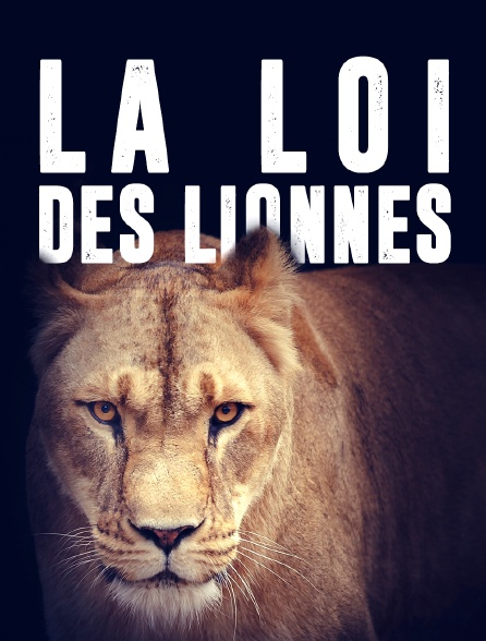 La loi des lionnes