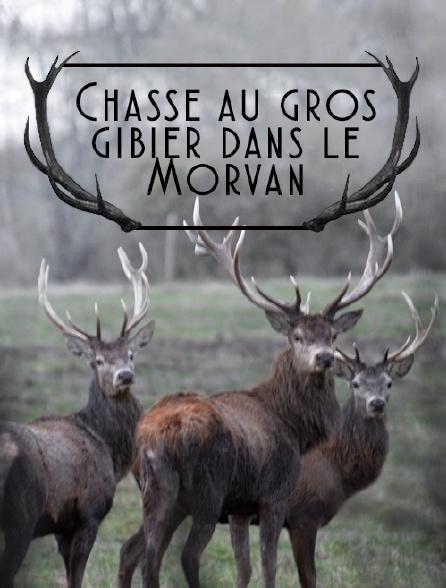 Chasse au gros gibier dans le Morvan