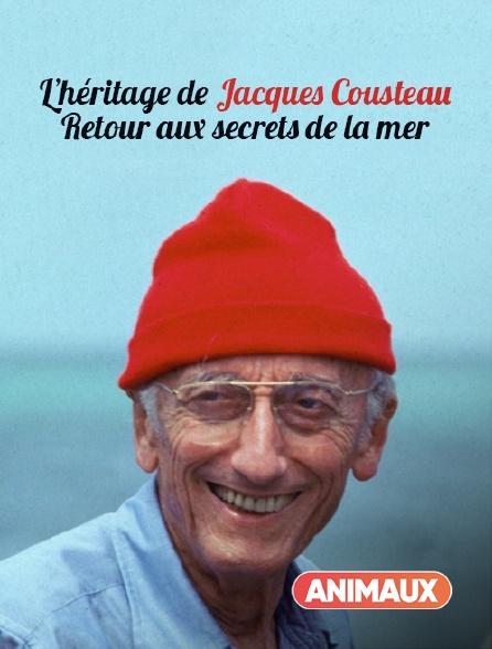 Animaux - L'héritage de Jacques Cousteau, retour aux secrets de la mer