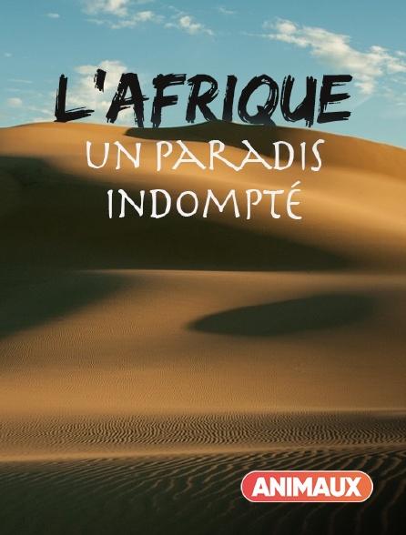 Animaux - L'Afrique, un paradis indompté