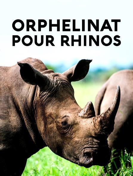 Orphelinat pour rhinos