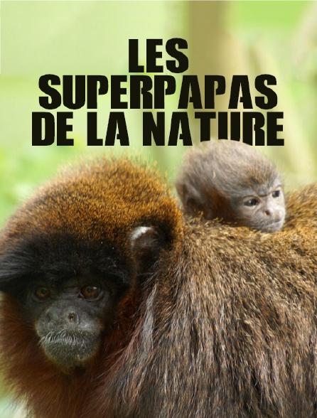 Les superpapas de la nature