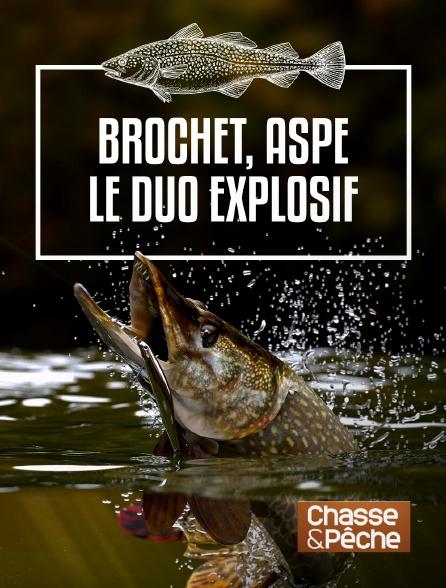 Chasse et pêche - Brochet, aspe : le duo explosif