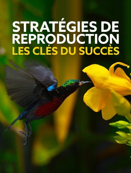 Stratégies de reproduction : les clés du succès 1 et 2 Jpg