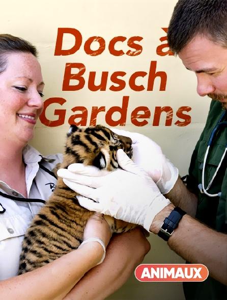 Animaux - Docs à Busch Gardens