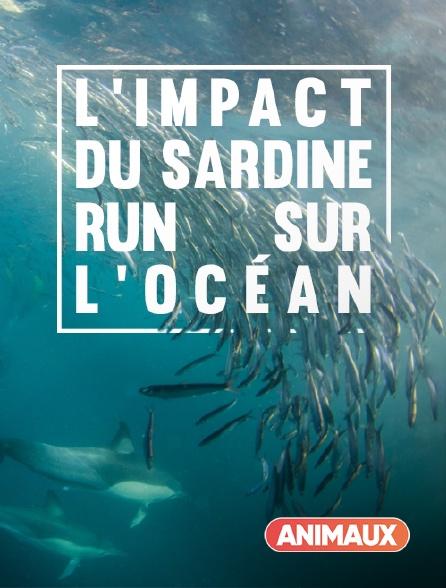 Animaux - L'impact du Sardine Run sur l'océan