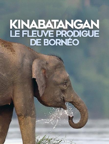 Kinabatangan, le fleuve prodigue de Bornéo