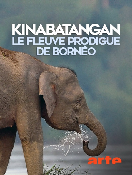 Arte - Kinabatangan, le fleuve prodigue de Bornéo