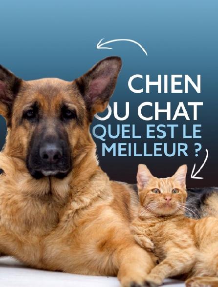 Chien ou chat : quel est le meilleur ?