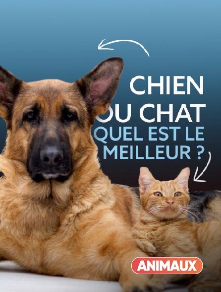 Animaux - Chien ou chat : quel est le meilleur ?