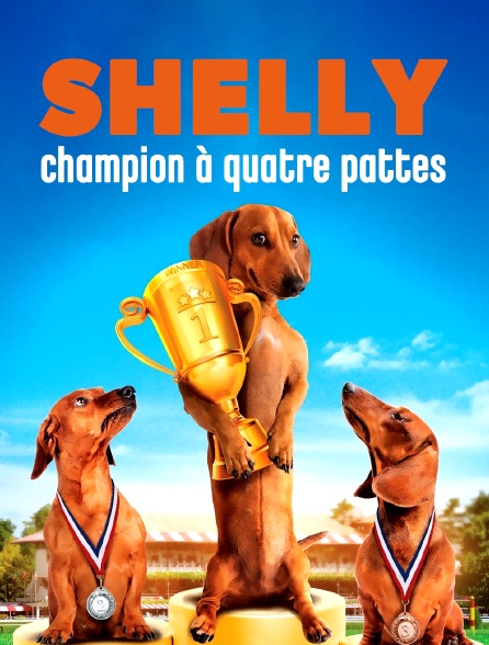 Shelly, champion à quatre pattes
