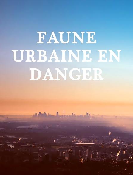 Faune urbaine en danger