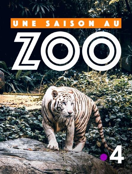 France 4 - Une saison au zoo en replay