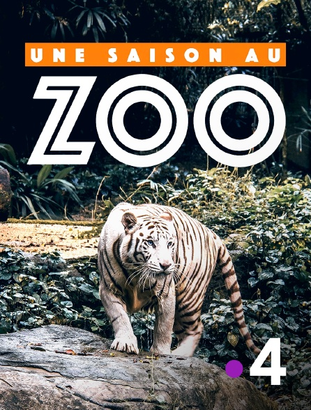 France 4 - Une saison au zoo en replay