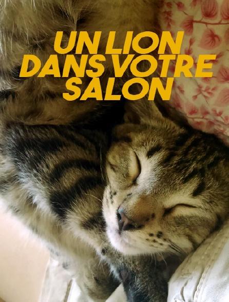 Un lion dans votre salon