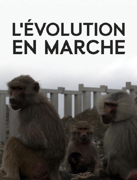 L'évolution en marche